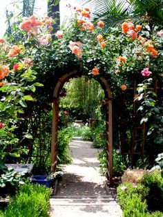 Rose Arch <3