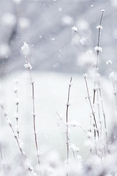 """60 Beautiful Flowers Wallpapers [Wallpaper Wednesday No white after labor day? White is definitely a trend regardless of this aged """"rule"""" Winter Love, Winter Snow, Winter Christmas, Hello Winter, Christmas Decor, Merry Christmas, Winter Wonderland Wallpaper, Foto Macro, Winter Schnee"""