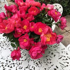 Flowers at Spazio @rossana_orlandi on the white #outside #furniture by Studio Job produced by Seletti ( @selettiworld ) #ro #rossanaorlandi #gallery #design #art #luxury #designshop #designers #gypset #bohemian #jetset #wanderlust #wonderland #love #italy #milan #unique #instacool #instatravel #flowerpower #glam #artistic #BESTofMILANdesignweek