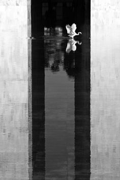 Oscar Niemeyer detrás del lente de Haruo Mikami,Reflexo das torres do Congresso. Imagen © Haruo Mikami