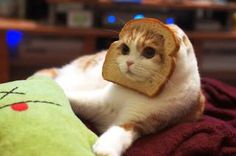 Can Cats Eat Bread Crust