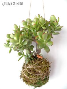 Succulent Kokedama - Hanging Hill via @Etsy