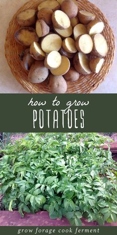 Garden Landscaping If you've never had a homegrown potato you're missing out! Here's how to grow potatoes, one of the easiest and tastiest veggies for your home garden. Garden Beds, Garden Art, Home And Garden, Garden Design, Box Garden, Garden Whimsy, Potato Gardening, Organic Gardening, Vegetable Gardening