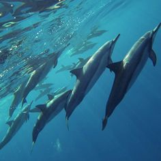 dolphins by the surface.