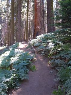 Crescent Meadow trail in summer (Sequoia National Park) photo © Elsah Cort