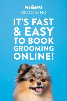 Need A Bath Or Groom It S Fast And Easy To Book Online Make Your Pet S Next Salon Appointment Now And Sele In 2020 Cute Animal Memes Dachshund Pets Petsmart Grooming
