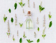 Tulsi (Holy Basil): Benefits Side Effects Types & Scientific Names Diluting Essential Oils, Essential Oils For Hair, Reiki, Homemade Bug Spray, Ravintsara, Vicks Vaporub, Oil Benefits, Growing Herbs, Handmade Soaps
