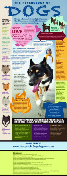 The Psychology of Dogs. History of dogs ad some important facts on their behaviour and dog instincts.