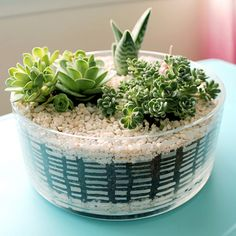 DIY Succulent Dish Garden   click through for the tutorial and tips for keeping succulents happy indoors