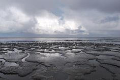 Tidal mudflats along the coasts of the Frisian Islands (or Dutch Wadden Sea Islands) in the Wadden Sea