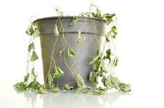 Save your plants against the elements! Check this article about crop protection, Crop Protection, Garden Supplies, Hydroponics, Horticulture, Houseplants, Planter Pots, Scene, Articles, Advice