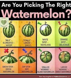 Get the best melons - FunSubstance Fruit And Veg, Fruits And Veggies, Vegetables, Fruit Picking, Sweet Watermelon, Everyday Hacks, Good Food, Yummy Food, Food Facts