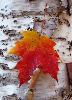 Autumn Leaf at Lake Superior - photo: © Shawn Malone ~ Fall Photos, Autumn Pictures, Lake Superior, Fall Season, Autumn Leaves, Autumn Harvest, Fall Halloween, Mother Nature, At Least