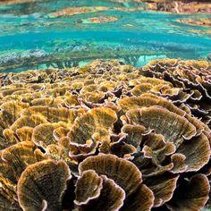 Saving marine ecosystem | Coral Guardian