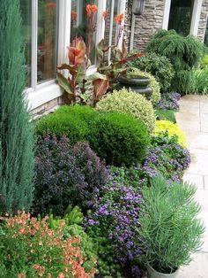 This is all planted way too close to the house, but love the texture low lavender, and clipped shrubs for front garden