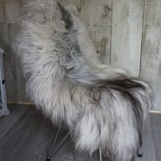 Brown Tipped Natural Icelandic Sheepskin on Chair
