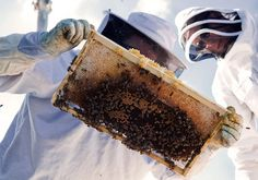 be a urban beekeeper