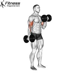 Basic Workout, Gym Workout Videos, Gym Workouts, At Home Workouts, Dumbbell Workout At Home, Biceps Workout, Gif Sport, Fitness Motivation Pictures, Lifting Motivation
