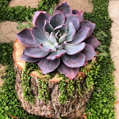 Hand Carved Succulent Wood Stump Planter on Etsy, $150.00