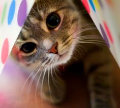 Peeking out of a Polka Dot Package