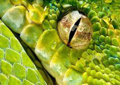 Python Eye by Henrik Vind