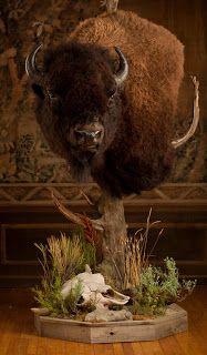 1000 Images About Buffalo Mounts On Pinterest Buffalo