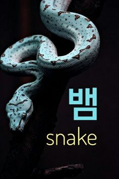 Snake in korean =뱀