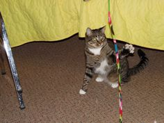 I'm going to catch that string!