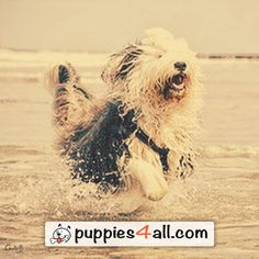 Find your lovely buddy on our site: http://puppies4all.com/ #dog #cute #puppy