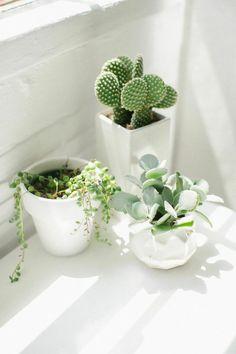 idée déco : réaliser un coin de jungle urbaine avec des cactus avec de jolis pots à côté d'une fenêtre