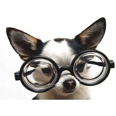 Puppy in Glasses ❤ liked on Polyvore featuring animals, dogs, backgrounds, pets and puppies