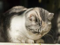 Understand #cat pain and how to manage it.