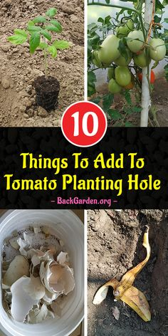 Jul 2019 - My secret for better tomatoes? I add these 10 things to the tomato planting hole and my tomato plants grow like crazy. Growing Tomato Plants, Growing Tomatoes, Growing Vegetables, How To Plant Tomatoes, Planting Vegetables, Veggies, Tomato Fertilizer, Organic Fertilizer, Garden Plants Vegetable