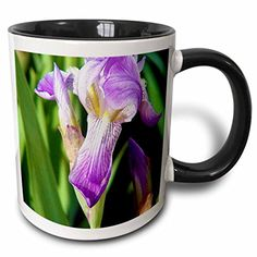 Jos Fauxtographee Realistic - A Purple Flower Up Close Drooping Down With Green Leaves with Yellow and White in The Center - 11oz Two-Tone Black Mug (mug_48285_4) 3dRose http://www.amazon.com/dp/B013521U0S/ref=cm_sw_r_pi_dp_T2Vaxb1T9VM73