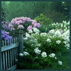 Le jardin de Carolyn Aiken