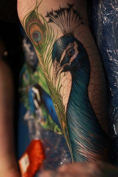 Headshot peacock tattoo.. Super detailed. #peacock #tattoo #detailed