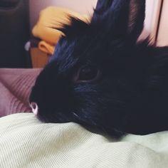 #rabbit #lapin #animal