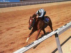 Ron Turcotte rides Secretariat on a practise run for the Belmont