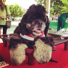 First post on our new NoVA Mag Insta account! Here's a throwback to Saturday's Wagfest event... Feelin' pawesome! #tbt #dogdaysofsummer #northernvirginia