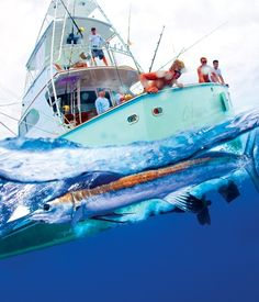 The outside 40 bermuda 39 s greatest adventures on pinterest for Fishing in bermuda