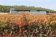 "Aalto Bodegas y Viñedos - Bodega ""CeroCO2"" Club, Plants, Wine Cellars, Learning, Activities, Projects, Flora, Plant"