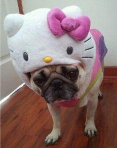 Lol...Hello Kitty!
