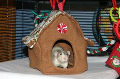 Ratropolis: New Hammock Added to Rat Hammock Tutorials: The House