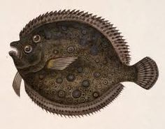 sunfish, flounder and all fish that are flat