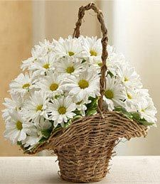 Basket Full of Daisies  Pure, lovely, and truly delightful! Express your best wishes and elated joy with a charming basket full of fresh flowers arranged by a talented florist