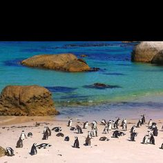 eeek! SOUTH AFRICA! Fingers crossed on going here this coming summer!