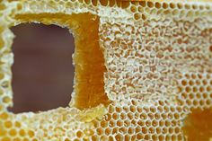 Have you ever wondered if you can eat honeycomb? Or have you ever imagined just how does honeycomb taste like? Is it Sweet, bitter, sour or tasteless? Can you freeze honeycomb? Propolis, Home Made Wax, Beeswax Recipes, Harvesting Honey, Honey Benefits, Health Benefits, Honey Lemon, Sem Internet, Bee Keeping