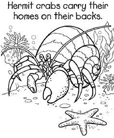 Hermit Crab Coloring Page | Printable Coloring Pages