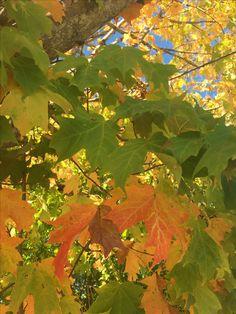 October glory