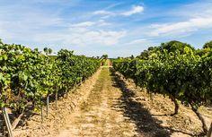 Nuestro estado está empoderado por sus características geográficas y climáticas. Gracias a representantes que van desde aquellos con siglos de tradición hasta empresas que recién comienzan, Coahuila se ha convertido en uno de los estados con mayor actividad vinícola en México. Conoce aquí a 11 de las casas que podrás conocer en el Winefest Coahuila 2015
